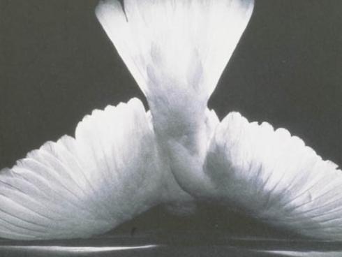 8. Over de Liefde – Doeschka Meijsing – FemShop